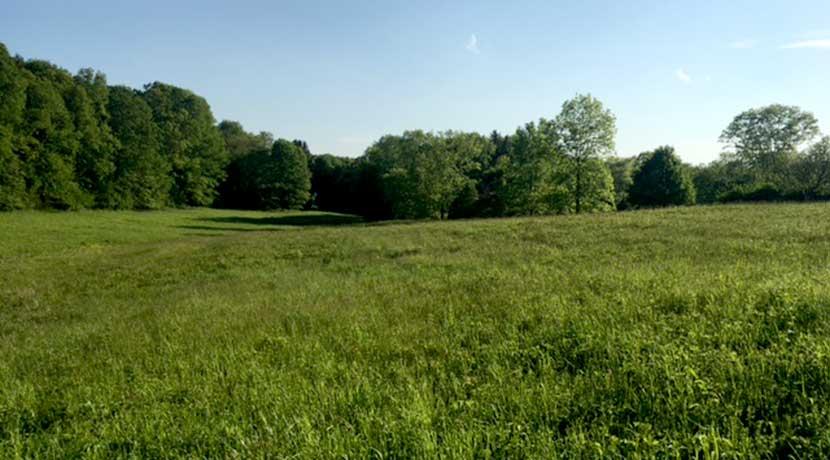 Donohue-meadow