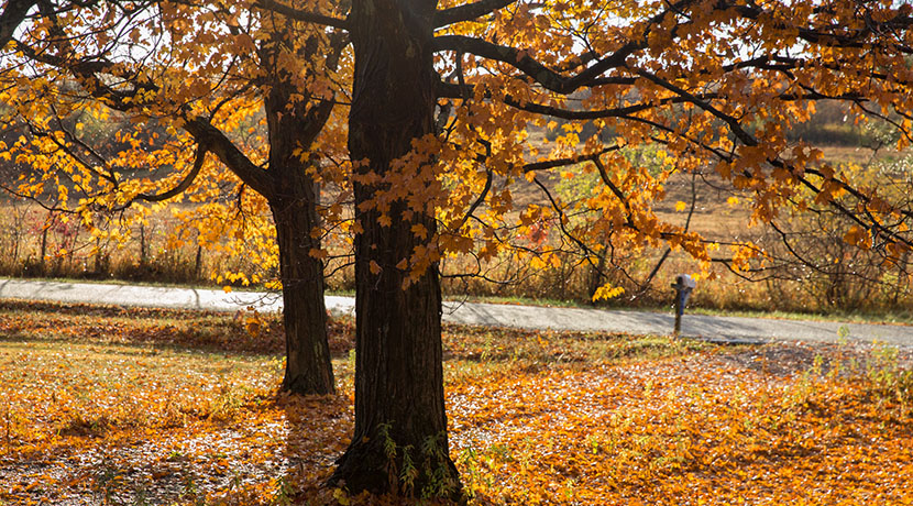 driveway_fall