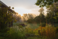 summer_sunriseweb