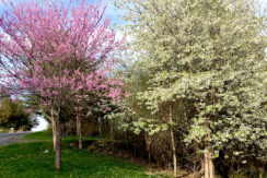 Lanza-property-in-bloom