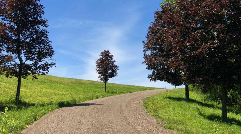Reed-land-driveway-7-18Web
