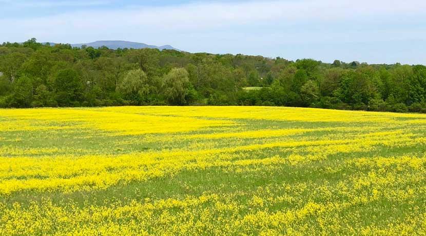 Hill-N-Dale-Meadow