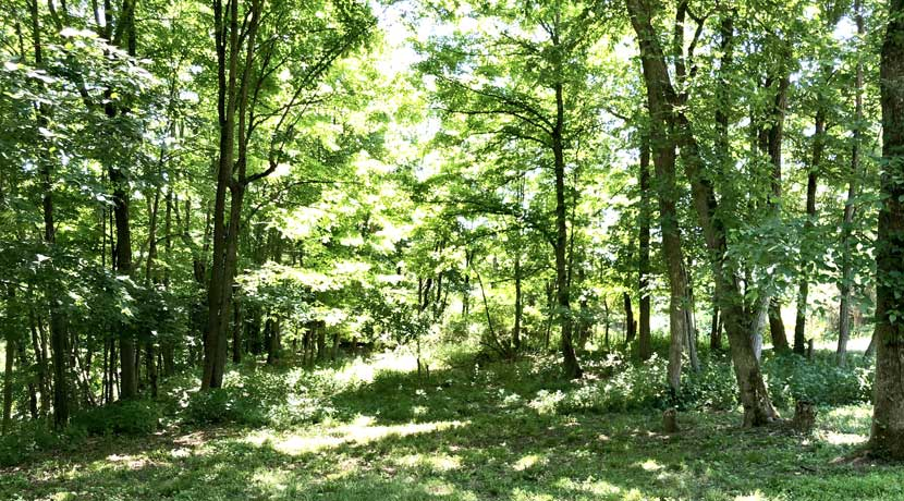 MS-Land-Camp-Road