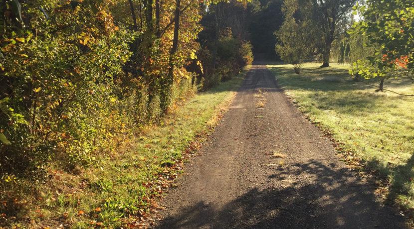 Viewmont-summer-driveway