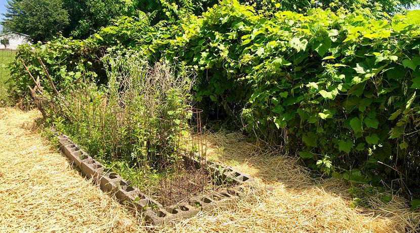 Finn-fenced-garden-area