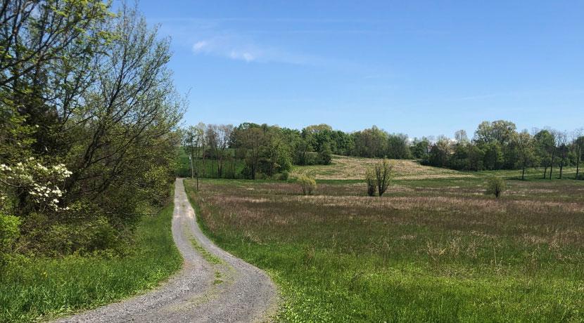 Lent-land-shared-driveway-