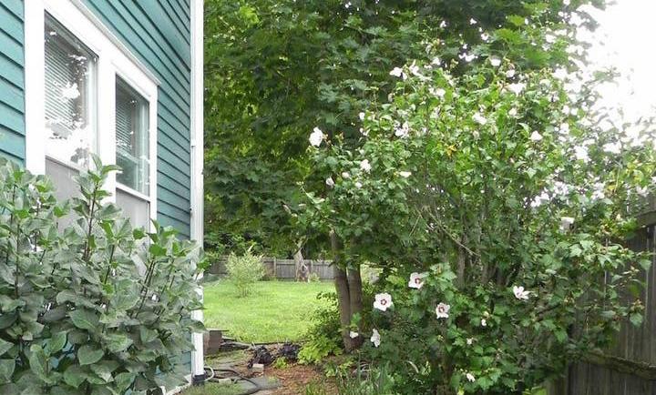 McIntosh-Garden